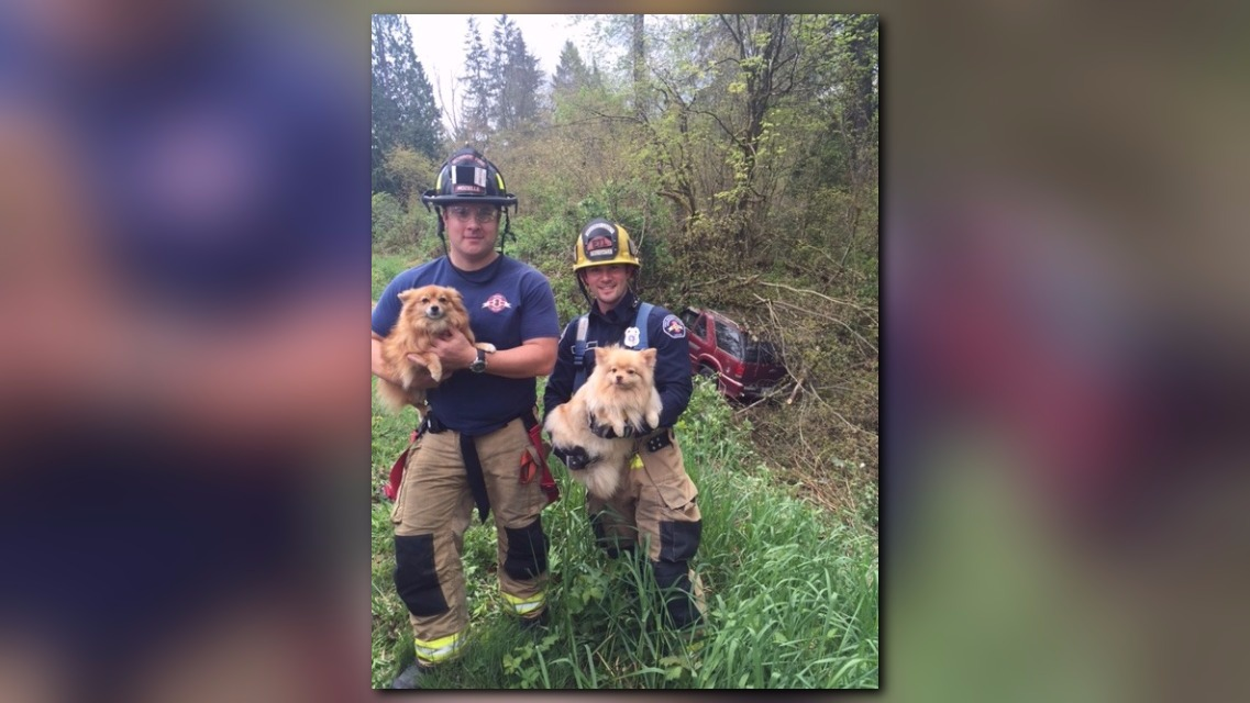King County Dog Rescue