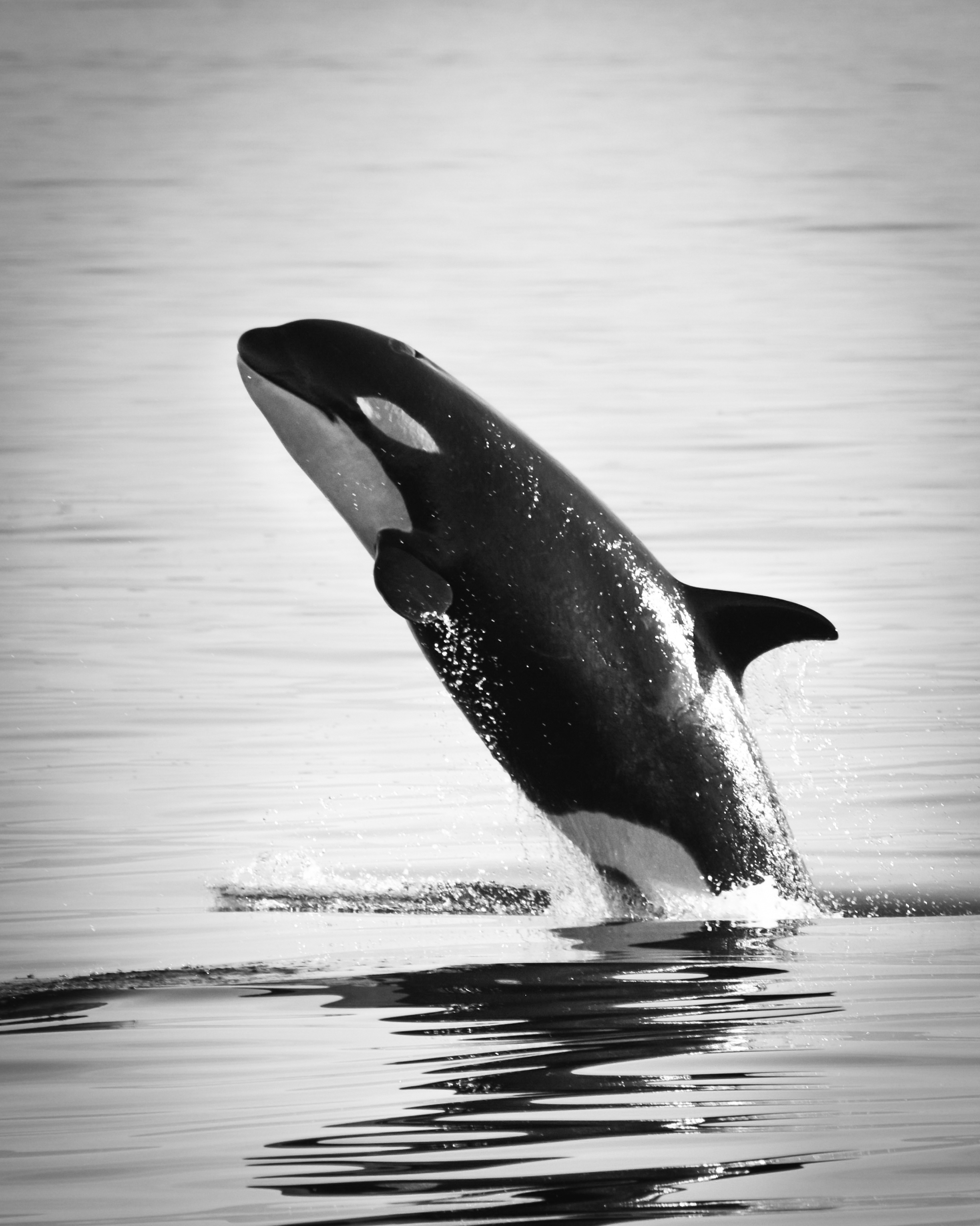 whale protection zone proposed near san juan island king5 com