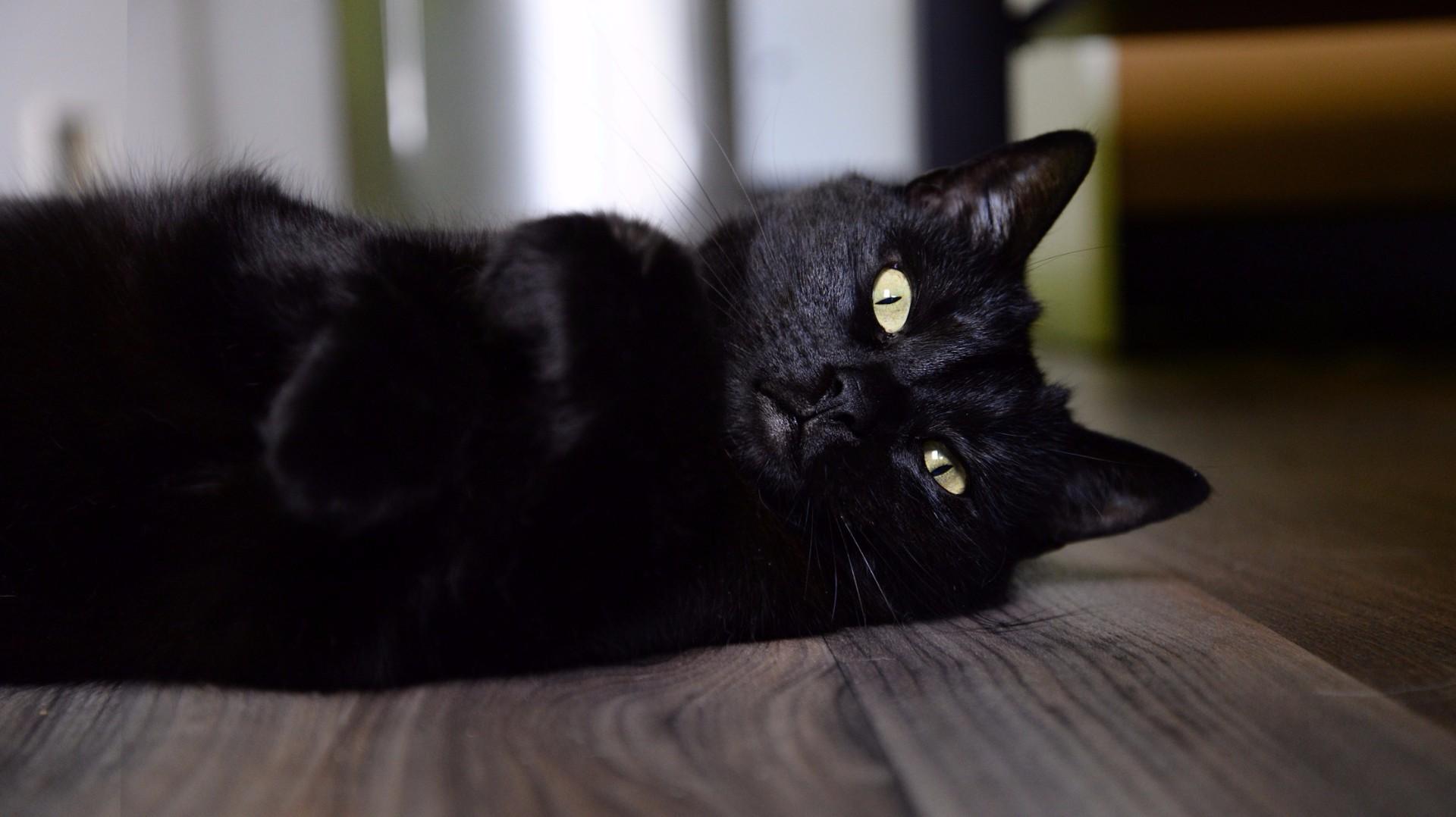 Review Beyond Cat Food