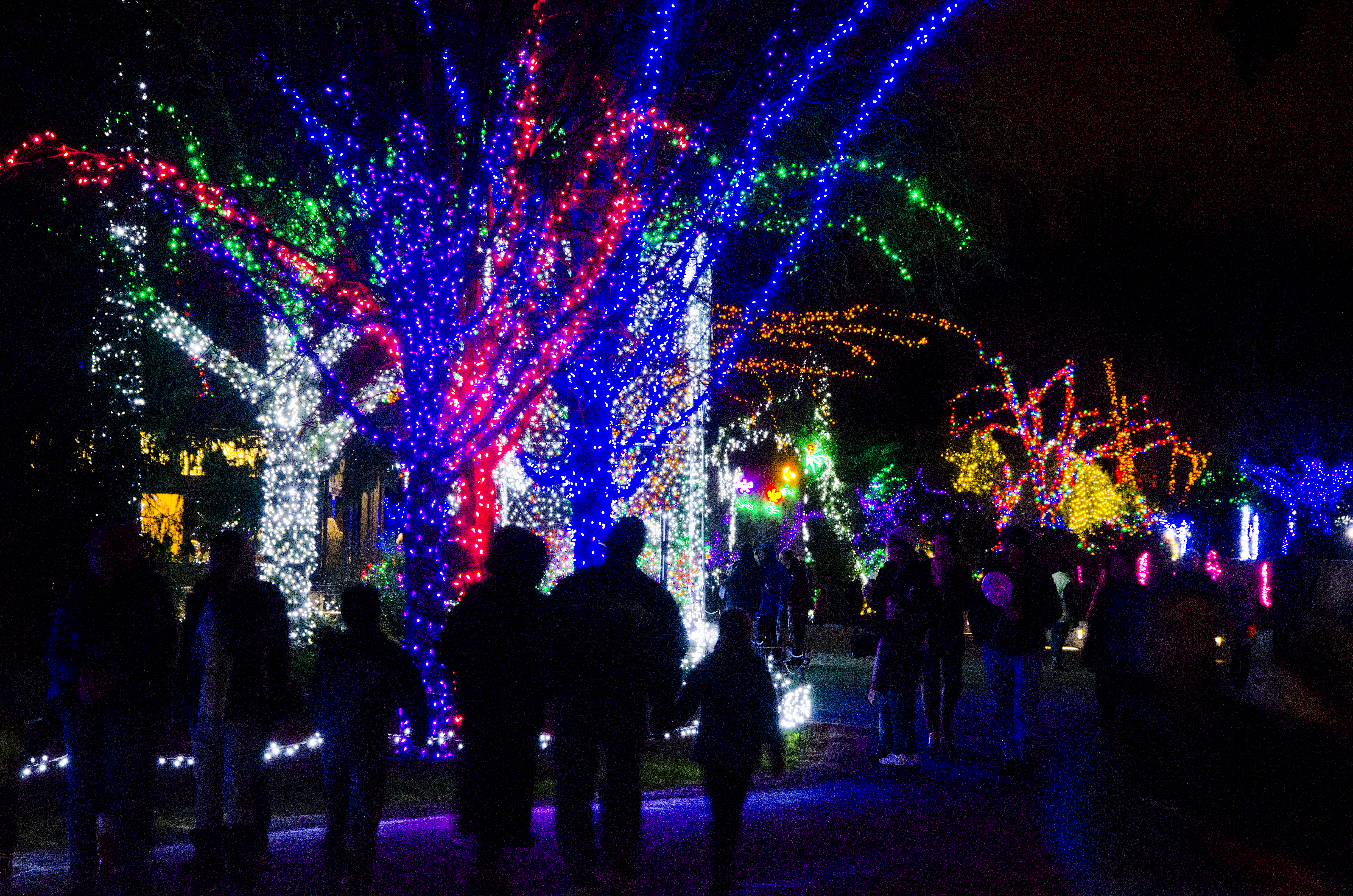 10 Seattle Area Holiday Light Displays To Visit This Season  - Christmas Lights Display Ideas