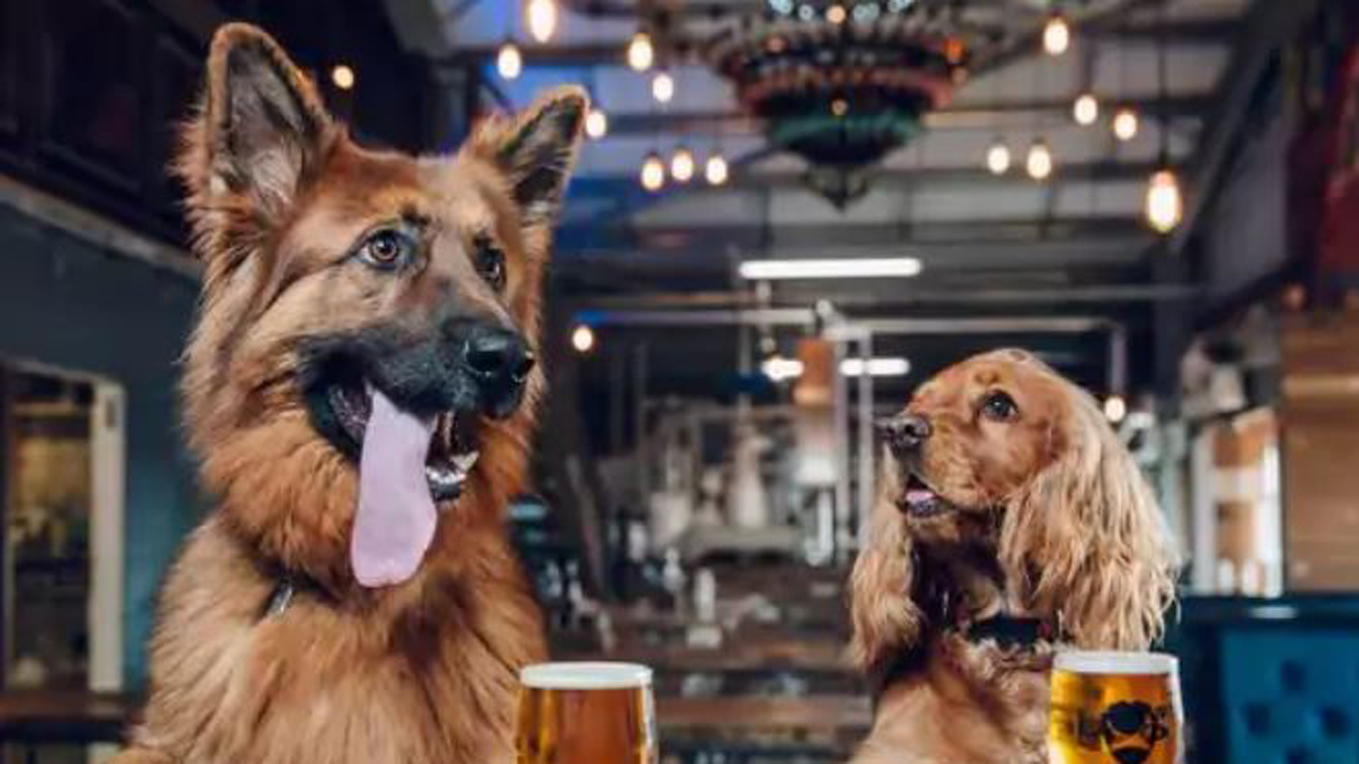 Brewery offers paid 'paw-ternity' leave for employees with new puppies
