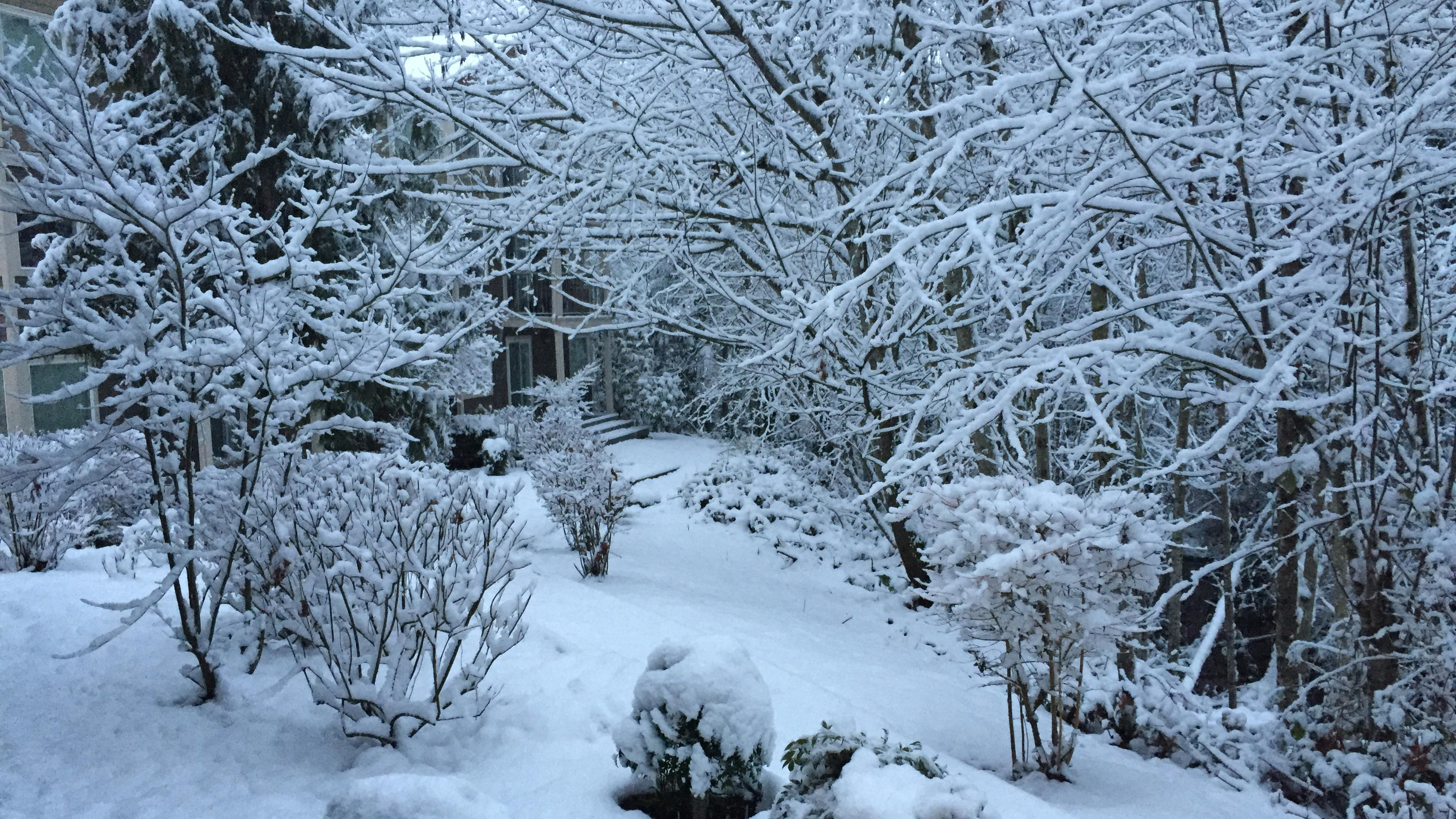 King5 Com Weak System Brings More Snow Wednesday